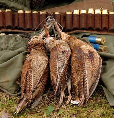 caza menor nacional Becada-2