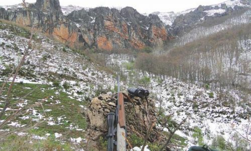 Corzos en la alta montaña leonesa