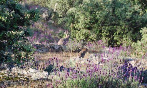 4 pilares fundamentales para cazar la liebre