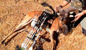 Caza con arco reportajes caza del muflon con arco
