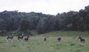 Caza-mayor-reportajes-internacional-caza-en-Africa-de ñues-y-otras-bestias-image17 (1)