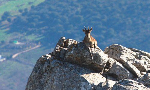 Capacidades de carga de los ecosistemas para especies de caza