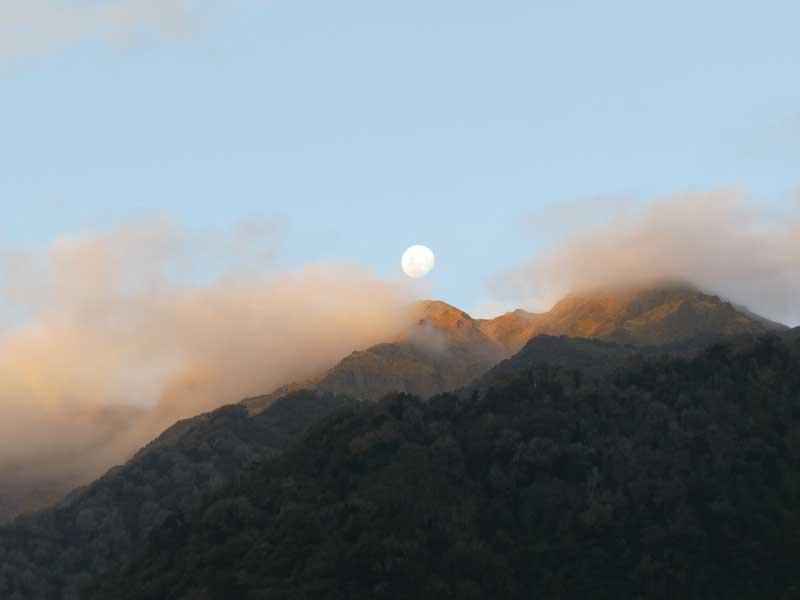 reportaje caza con arco Arco-Nueva-Zelandafin
