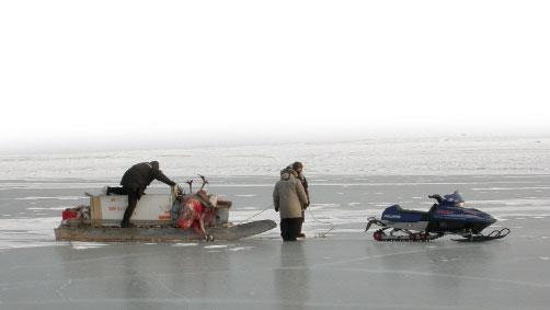 Caza-mayor-reportajes-internacional-caza-de-buey- almizclero-en-Canadá-4