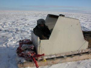 Caza-mayor-reportajes-internacional-caza-de-buey- almizclero-en-Canadá-9