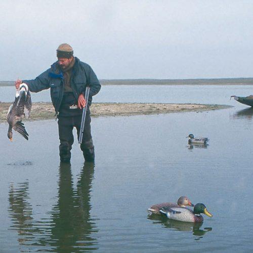Cacerias de gansos y patos en los cinco continentes