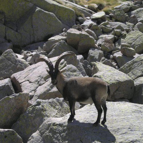 Cazar en  parques nacionales