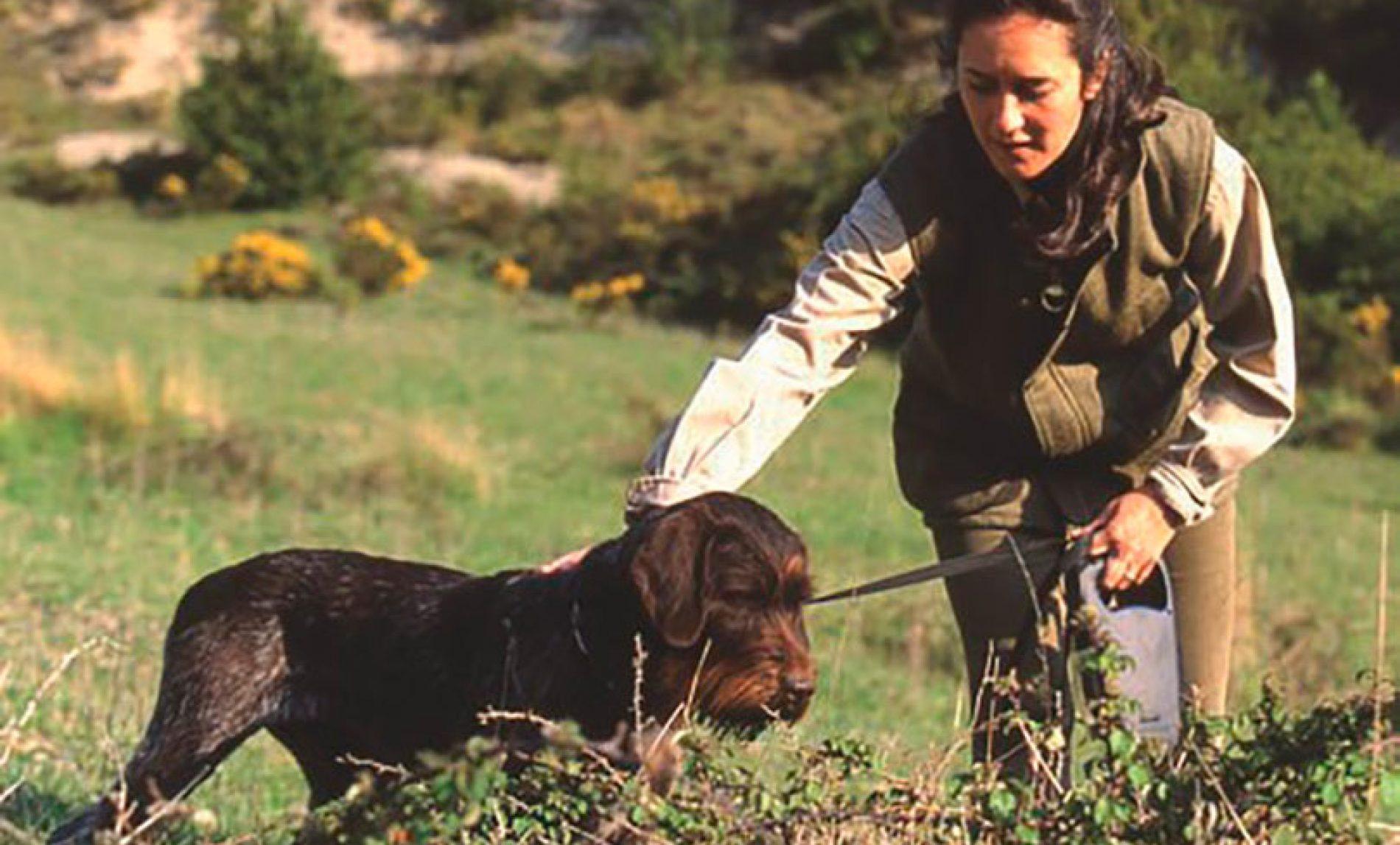 La educación del perro de caza