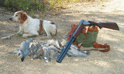 Armas y cartuchos para media veda
