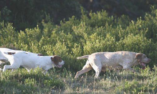 Bases del aprendizaje del perro de caza