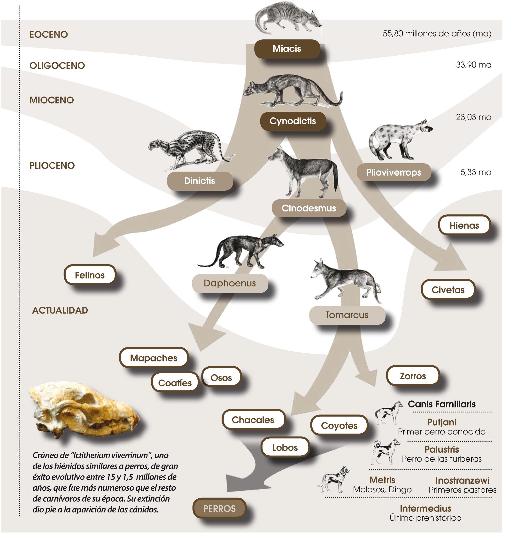 arbol-origen-del-perro-en-la-prehistoria