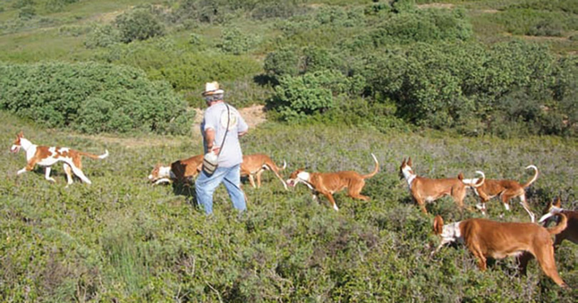 La zona de adiestramiento para perros de caza