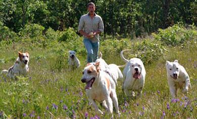 perros-de-caza-adiestramiento-la-zona-de-adiestramiento-para-eel-perro-de-caza