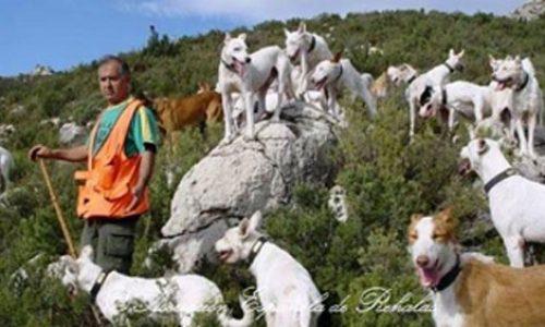 La Consejería De Agricultura De Andalucía Contra Las Rehalas