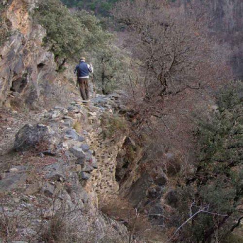 Jabalíes en los Pirineos