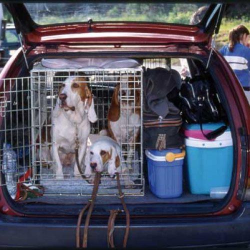 ¿Qué hacer con nuestro perro de caza en vacaciones?