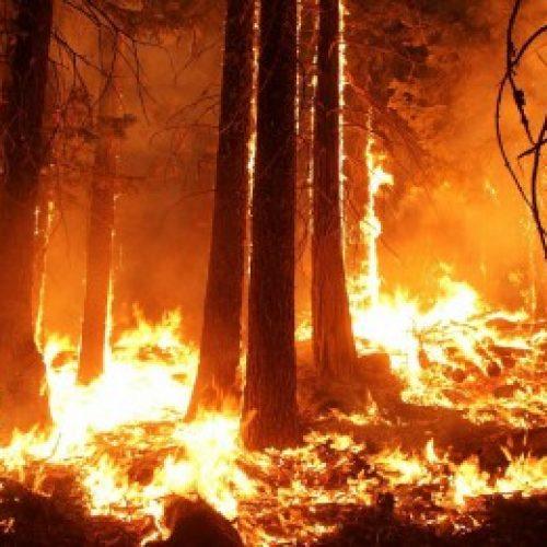La ONC pide los medios necesarios para condenar a los responsables de los incendios