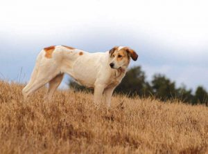 perros-asilvestrados-detalle-3