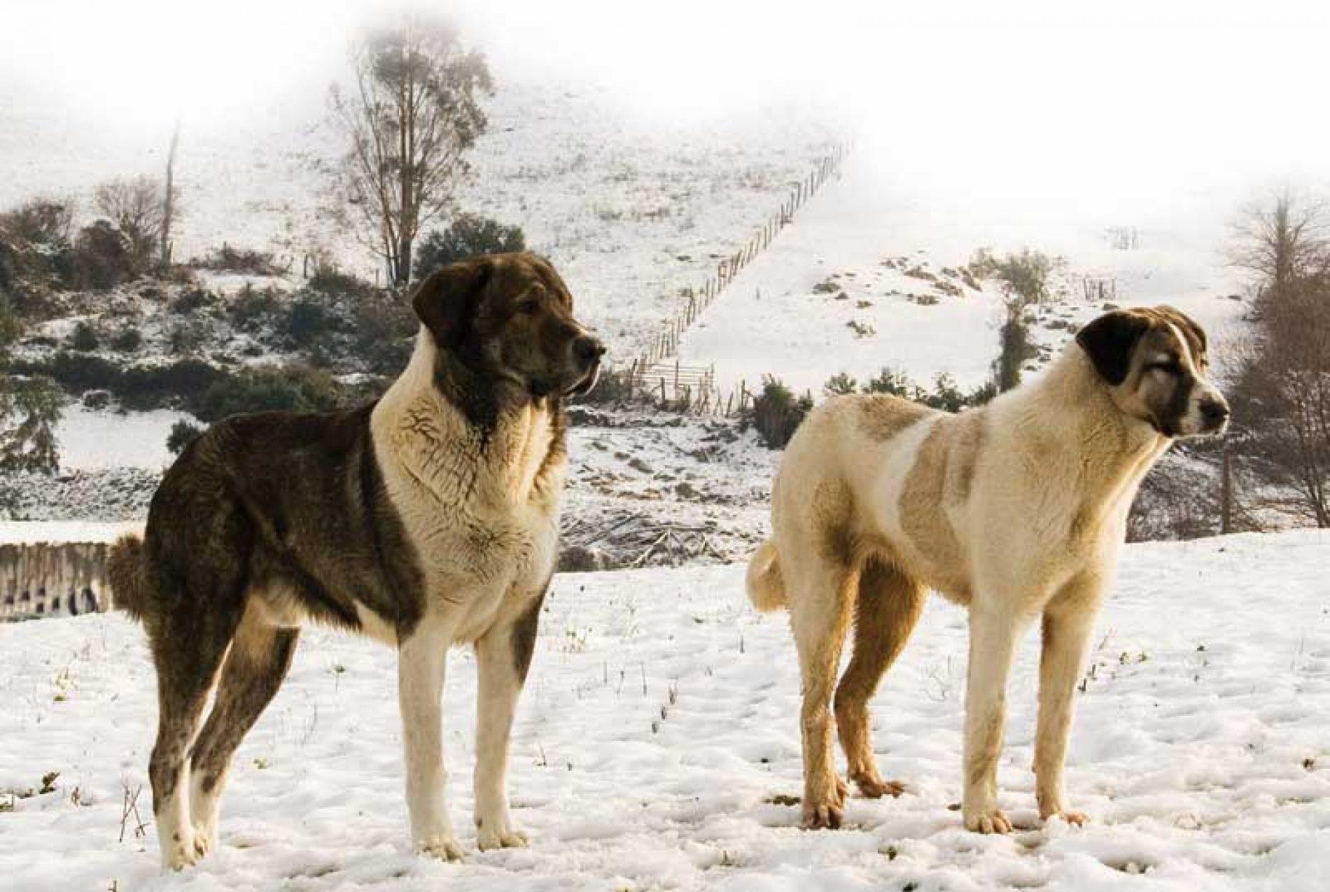 Perros Asilvestrados, enemigos de la caza