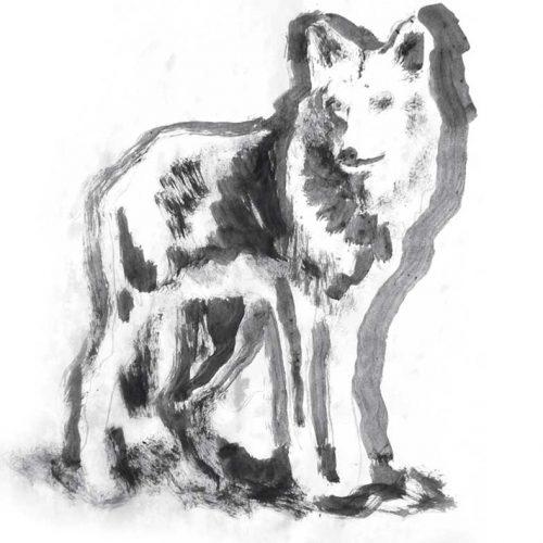 ¿Quién responde de los daños provocados por lobos?