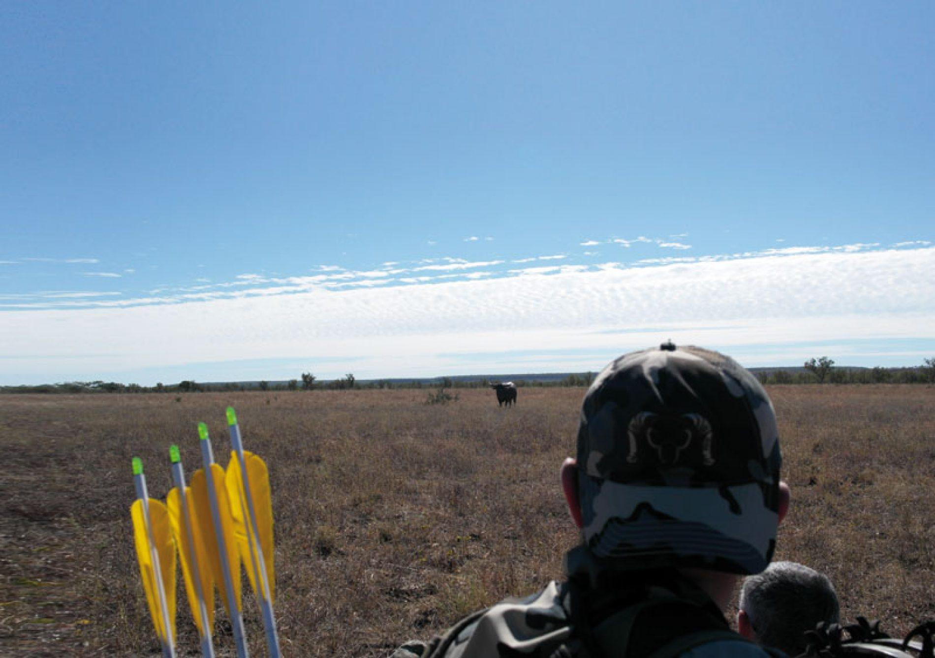 Rececho, con arco, de búfalos de agua en Australia