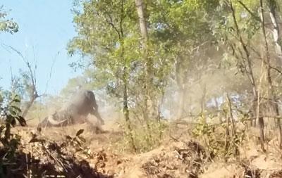 Bufalos-arco-secuencia-3