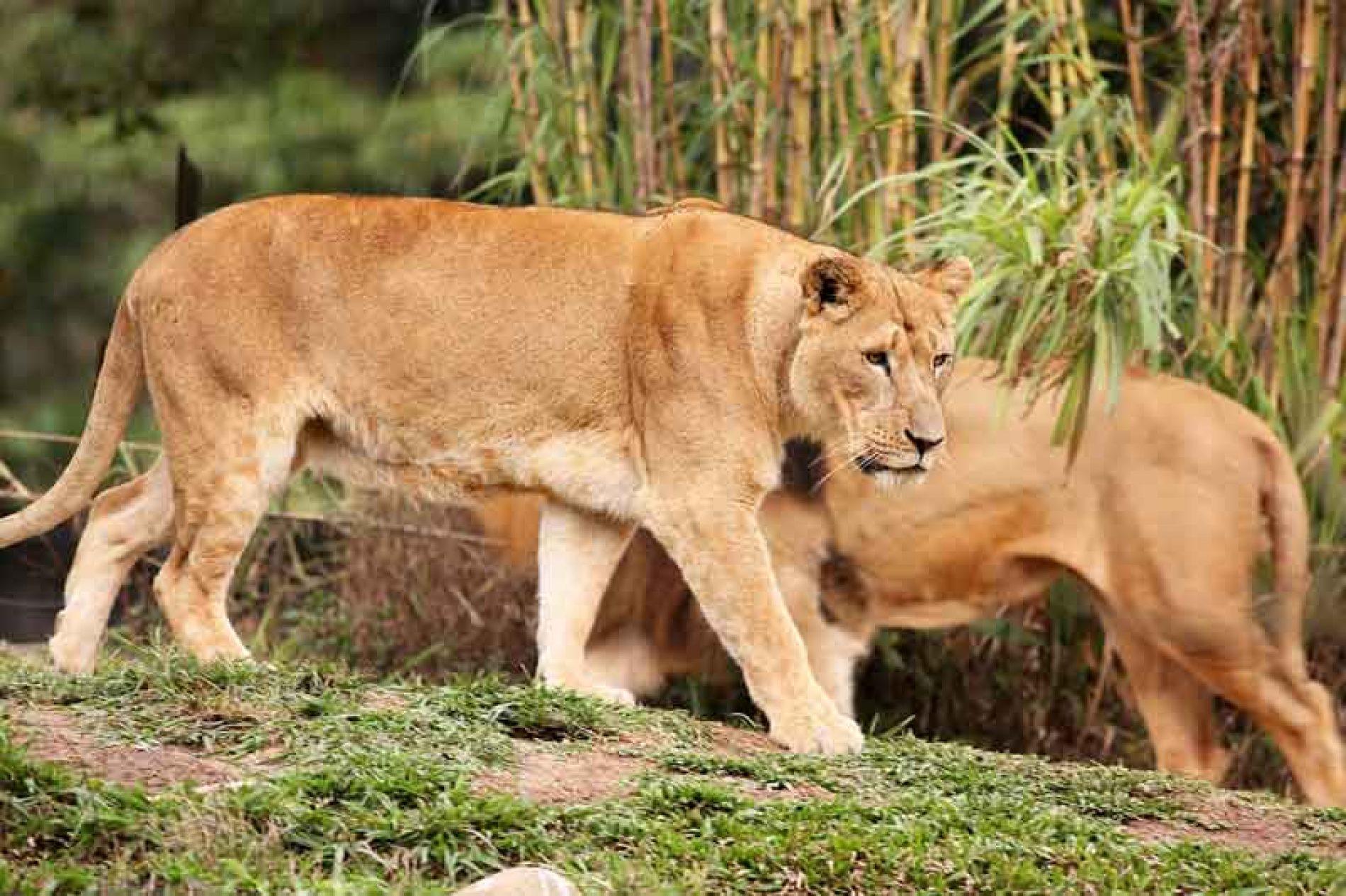 """Ahora resulta que las leonas son """"bi""""."""