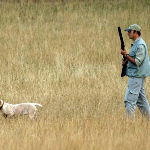 ¿Cómo conseguir que mi perro tenga afición a la caza?