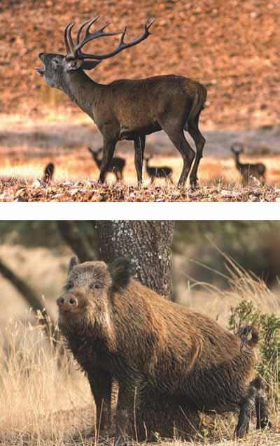 coto-los-claros-caza-mayor