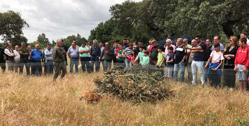 II-encuentro-caza-y-campo-perros-de-rastro