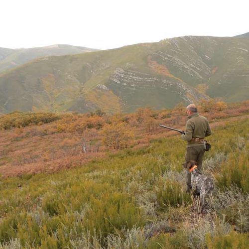 Valoración técnica de los periodos hábiles de caza en España