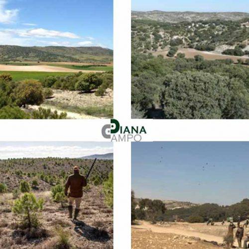 Diana campo ya tiene sus programas de ojeo y caza en mano 2017/2018