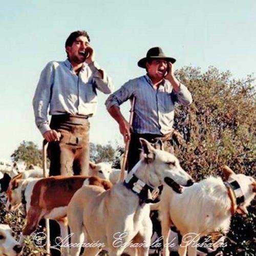 La AER presenta alegaciones al decreto de protección de animales en Madrid