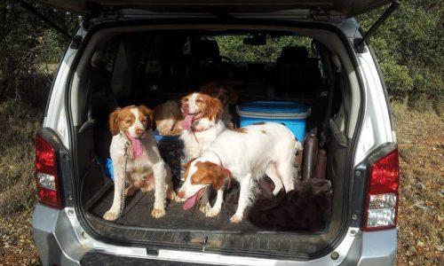 5 consejos para el cuidado tu perro de caza durante el verano