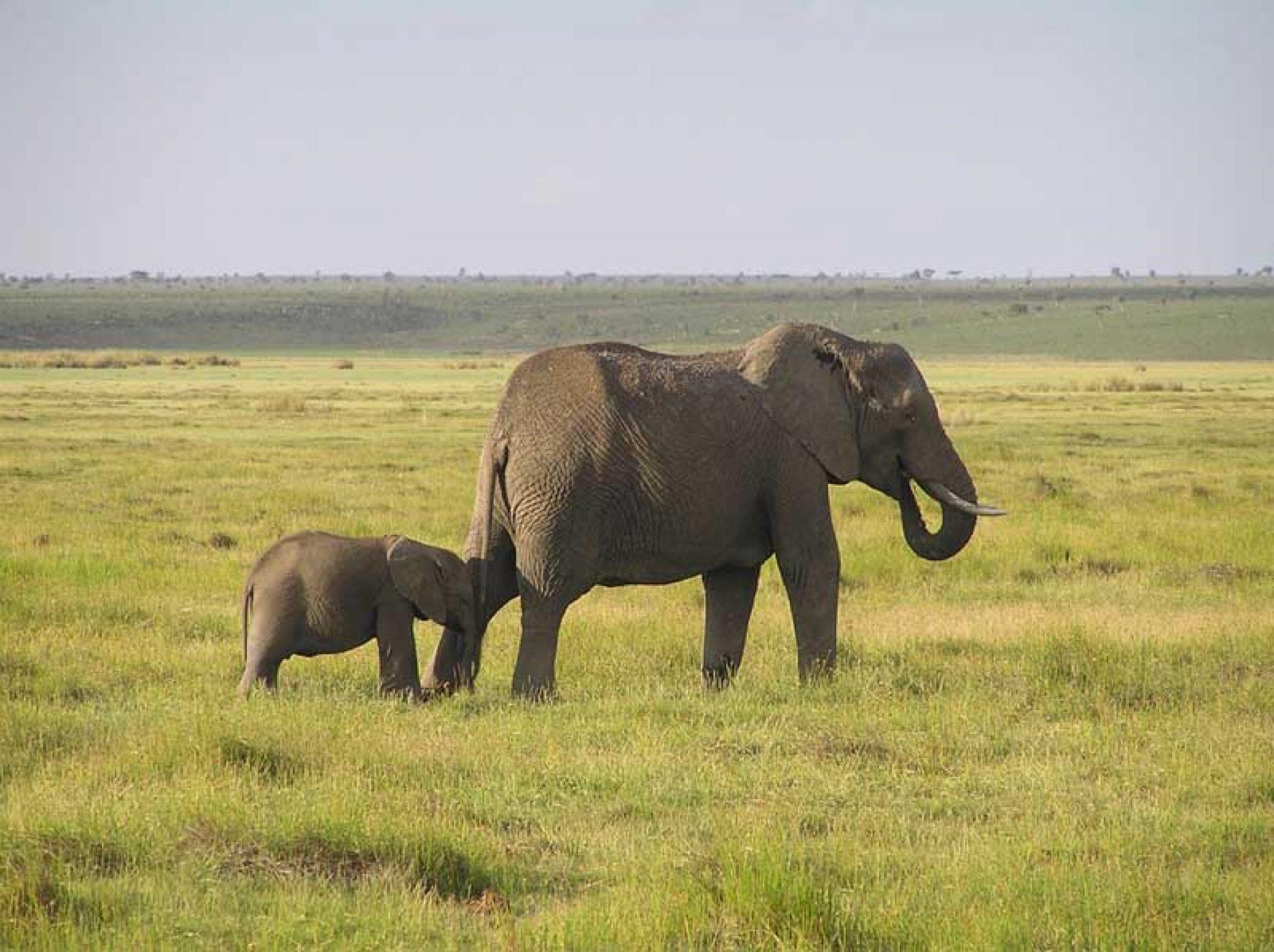 Elefantes, rinocerontes y furtivos en África