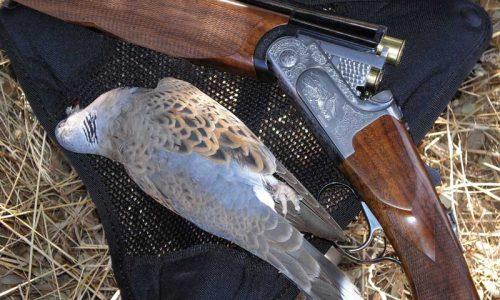 Media Veda, escopetas, calibres, cargas y otras consideraciones