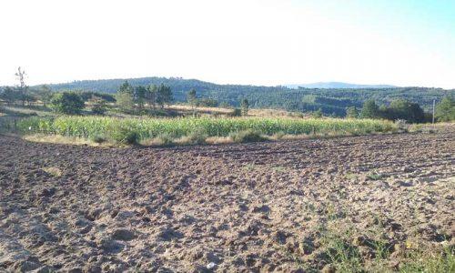 La temporada de caza mayor en Galicia condicionada por la sequía