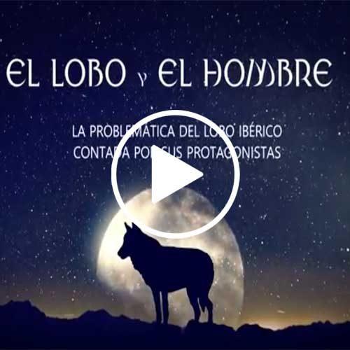 """""""El lobo y el hombre"""" el mejor documental  sobre la gestión del lobo"""