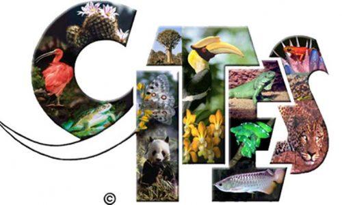 ¿Qué es el CITES, los responsables y su objetivo?
