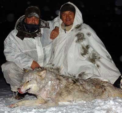 Rececho-en-Kirguizia-lobo