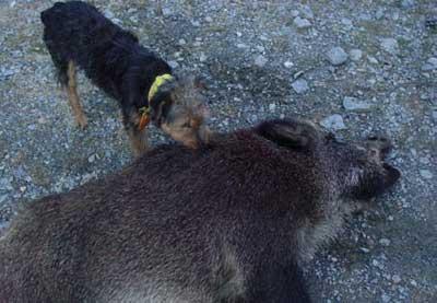 Batidas-de-Montana-perro