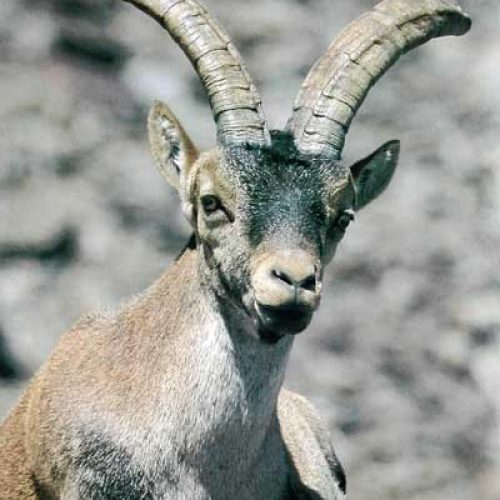 Reserva Regional de Caza Sierra de Gredos