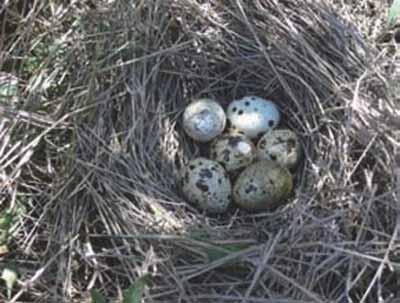 Recuperar-C.-Menor_huevos
