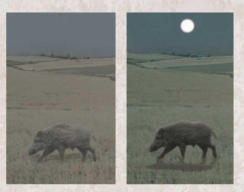 Rececho-Nocturno-lunas