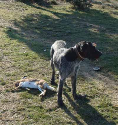 Liebre-en-los-Llanos-perro