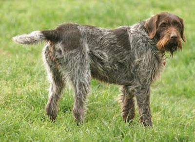 La alimentaci n del perro de caza trofeo caza - Pienso para perros de caza ...