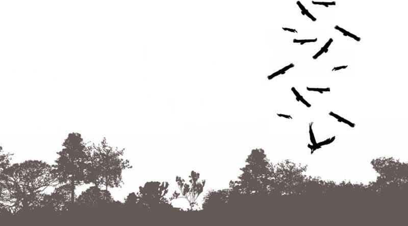 Corzos-buitres