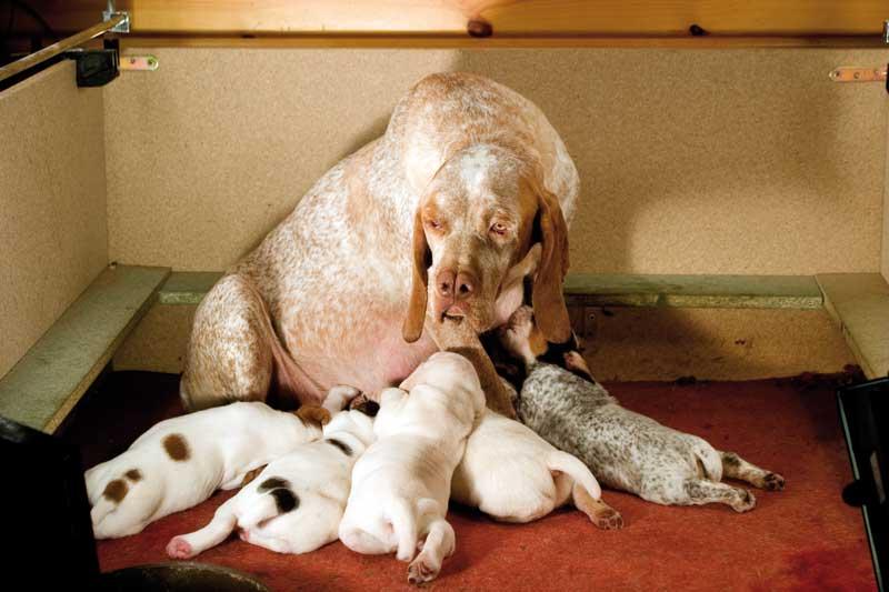 El-perro-veda-II-cachorros