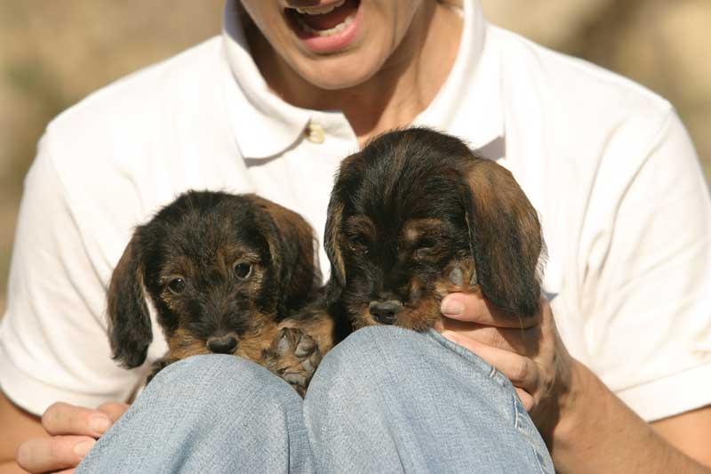El-perro-veda-II-cachorros2
