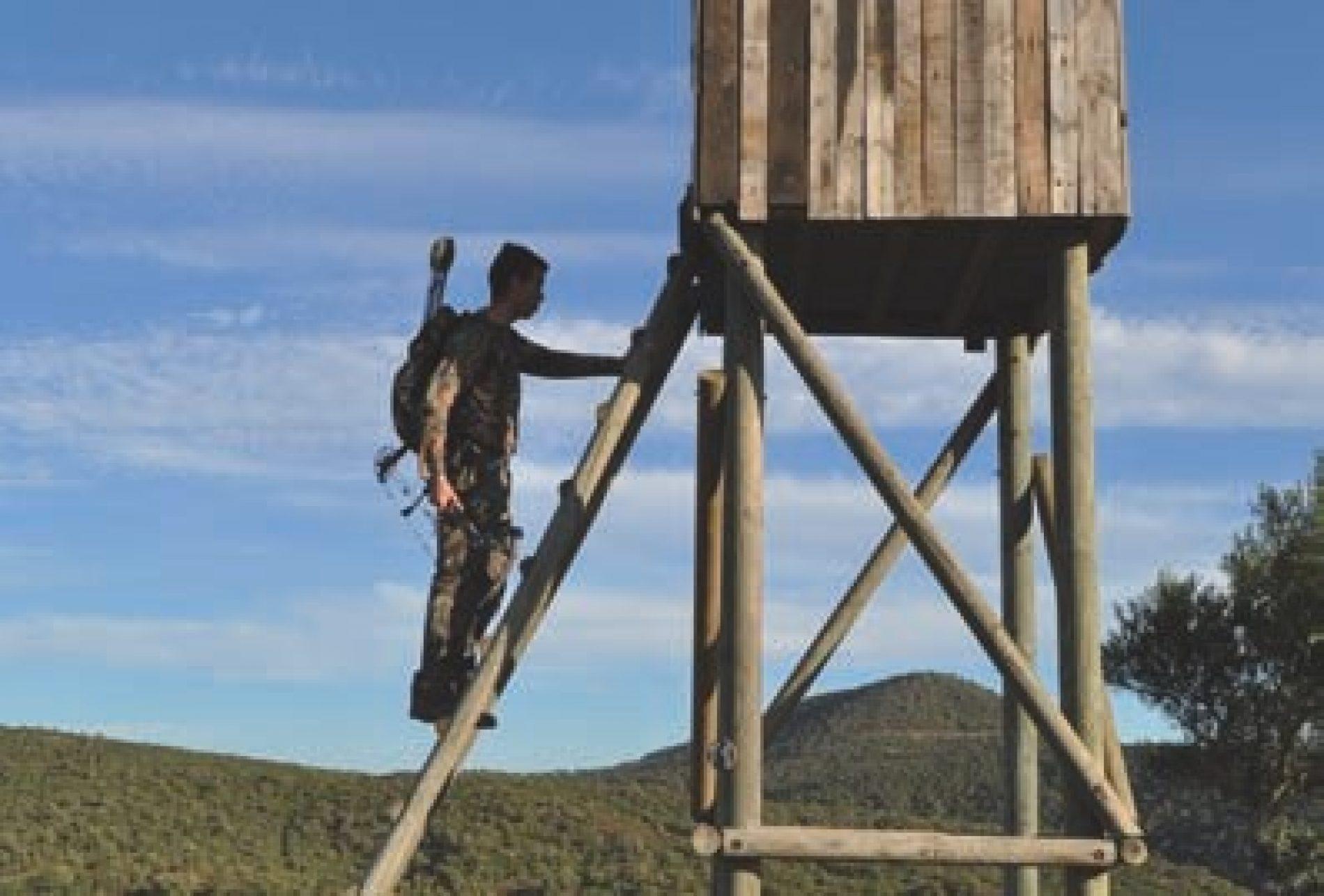 ¿Dónde colocar el disparo en la caza con arco?